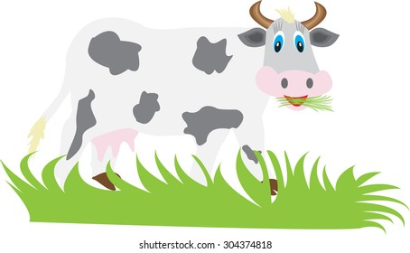funny cow eating grass on a white background
