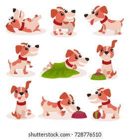 Funny jack russell terrier characters set, cute dog in different poses and situations vector Illustrations