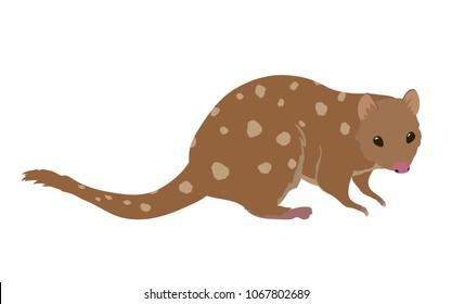 Funny little australian animal quoll. Cartoon clip art illustration on white background.