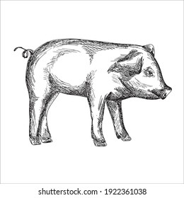 Funny Pig coloring pages, Pig coloring pages, Animal Coloring page Funny Pig coloring page Design for Kids Children preschool stock vector style illustration