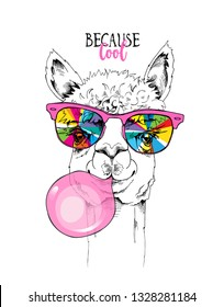 Funny poster. Llama in a rainbow glasses and with a pink bubble gum. Because cool - lettering quote. Humor card, t-shirt composition, hand drawn style print. Vector illustration.