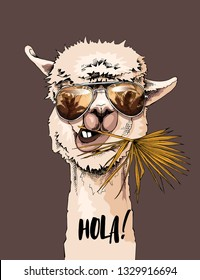 Funny poster. Portrait of Llama in a sunglasses with a fan palm leaf. Hola! - lettering quote. Humor card, t-shirt composition, hand drawn style print. Vector illustration.
