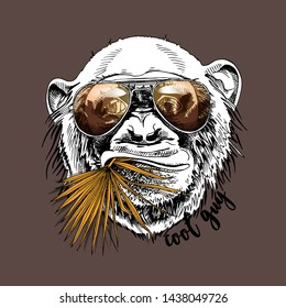 Funny poster. Portrait of Monkey in a gold sunglasses with a fan palm leaf on a brown background. Humor card, t-shirt composition, hand drawn style print. Vector illustration.