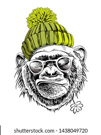 Funny poster. Portrait of Monkey in a green hipster knitted hat, in a sunglasses and with a chamomile flower. Humor card, t-shirt composition, hand drawn style print. Vector illustration.