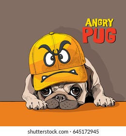 Funny Pug in a yellow cap with angry smiley. Vector illustration.