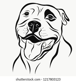 Funny staffordshire terrier