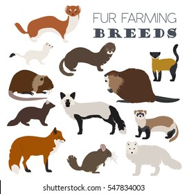 Fur farming. Flat design. Vector illustration