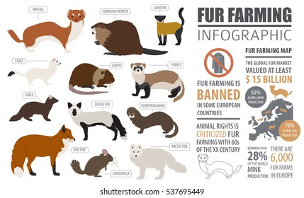 Fur farming infographic template. Flat design. Vector illustration