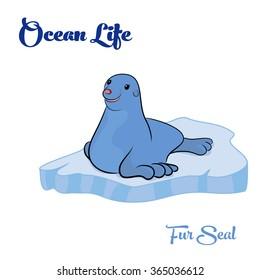 Fur Seal on the ice floe