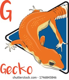 G for the gecko, a reptile that looks like a lizard and has the sticky legs to walk on the wall or trees.