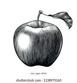 Gala apple fruit drawing vintage clip art isolated on white background