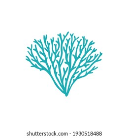 Galaxea sp., acropids stony coral isolated icon. Vector galaxy coral, aquarium seaweed decoration, coral reefs element. Soft underwater plant and tip jardinei polyp stony calcareous, undersea fauna