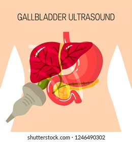 Gallbladder ultrasound concept. Medical illustration of the bile duct and surrounding organs inside of body. Simple vector image in flat style.