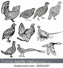 Game birds set in engraved vintage style hand drawn