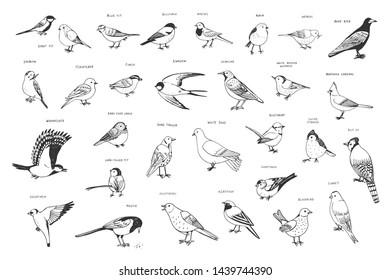 garden birds vector hand drawn line illustrations set