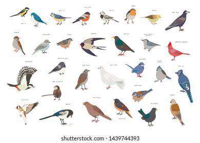 garden birds vector hand drawn illustrations set