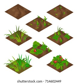 Garden or farm isometric tile set. Isolated tiles with grass and strawberry fruits .. Vector illustration, can be used as a farm game asset  to create landscape or garden scene.