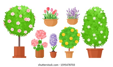 Garden flowers in pots flat vector illustrations set. Roses bush, tulips and in flowerbed, fruit tree isolated design elements bundle. Potted lilac and lavender blooming plants on white background.