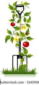 garden fork, tools for the gardener and tomato