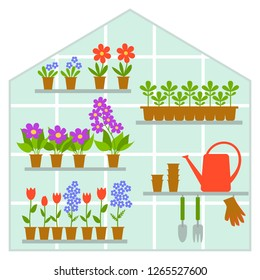 Garden greenhouse with plants growing in pots. Growing flowers and plants in the glass greenhouse Trendy vector illustration in flat cartoon style.