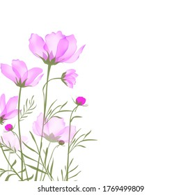 Garden landscapes, summer and spring flower bed.Vector illustration spring and summer garden flowers isolated on white.