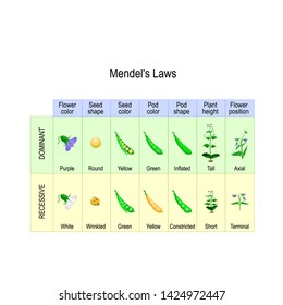 Mendel's Garden Pea Plant Experiment. Mendelian inheritance is a type of biological inheritance that follows the laws: Segregation, Independent Assortment and Principle of Dominance.