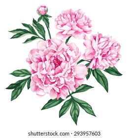 Garden peony. Watercolor, hand painted, isolated on white background. Vector illustration.