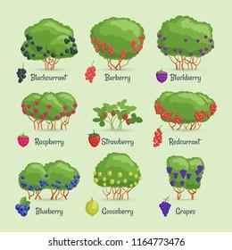 Garden shrubs set. Cartoon images berry bushes. Vector illustration