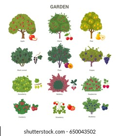 Garden trees and shrubs collection. Vector illustration of fruit trees and berry bushes, such as apple, cherry, pear, black currant, barberry and strawberry. Isolated on white.