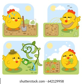 Gardening chicken set: digging a bed, sowing seeds, watering pea plant and harvesting carrots (set of four kawaii style illustrations)