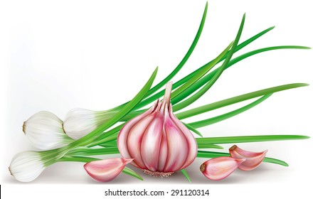 garlic bulb and green onions on a white background. vector