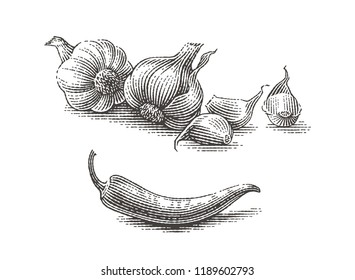 Garlic and chili pepper composition. Spice. Hand drawn engraving style illustrations.