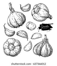 Garlic hand drawn vector illustration set. Isolated Vegetable, clove, sliced pieces.  Engraved style object. Detailed vegetarian food drawing. Farm market product. Great for menu, label, icon