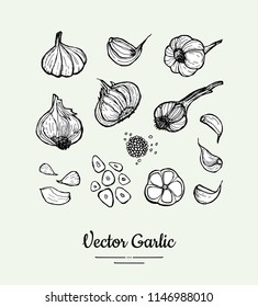 Garlic set. Hand drawn black white vector isolated clove, heads, chopped garlic illustration. Hipster garlic hand drawn illustration for vegetarian poster, banner, logo, icons, sticker, menu, shop.