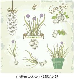 Garlic vegetables, herb, plant,  vintage background, packaging product