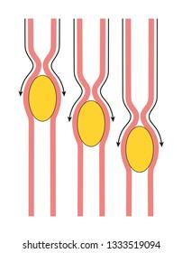 Gastrointestinal peristalsis diagram