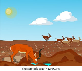 Gazelle drinking water. Other gazelles running in the background. Vector illustration.