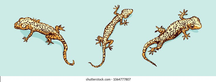 Gecko set. Three geckos.  Vector illustration is isolated on background
