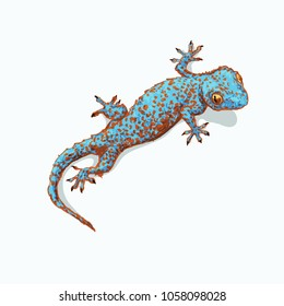 Gecko is sitting on flat gray surface. Vector illustration is isolated on background and the shadow. Geckon print for fashion clothes