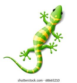 Gecko. Vector. No Mesh tool.