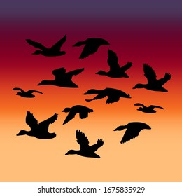 geese are flying at sunset, landscape.