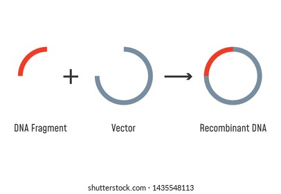 Genetic Recombination Images, Stock Photos & Vectors   Shutterstock