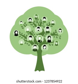 Genealogical family tree with avatars isolated on white background. Genealogy tree for dna ancestors illustration