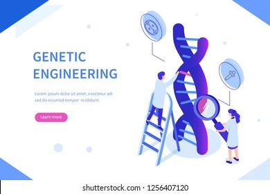 Genetic scientists edit DNA. Can use for web banner, infographics, hero images. Flat isometric vector illustration isolated on white background.