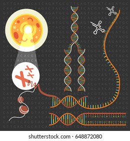 Genetics DNA structure  and chromosomes