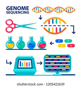 genome sequencing infographic. Human genome project. Flat style vector illustration