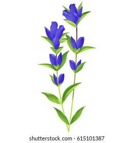 gentian - birth flower vector illustration in watercolor paint textures