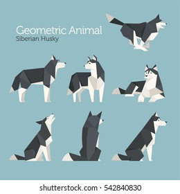 geometric lowpoly animal siberian husky dog various poses vector illustration flat design
