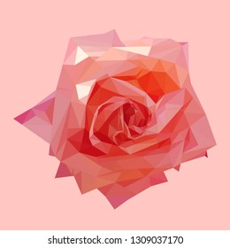 geometric polygonal coral pink rose, isolated polygon vector flower illustration
