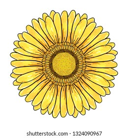 Gerbera Daisy flower, Colorful yellow head Isolated on white background, Floral Illustration. Hand drawn vector pen and ink illustration of Gerbera Daisy flower in Vintage sketch style